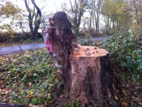 Woldgate-Felled-Totem-3