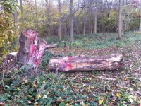 Woldgate-Felled-Totem-7