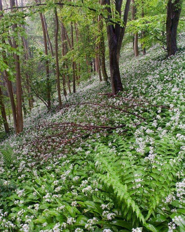 Millington Woods Yorkshire Wolds