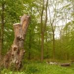 Woldgate Totem