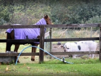 Truffle-and-pony-Broadgate-
