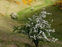 Sylvan Dale Yorkshire Wolds
