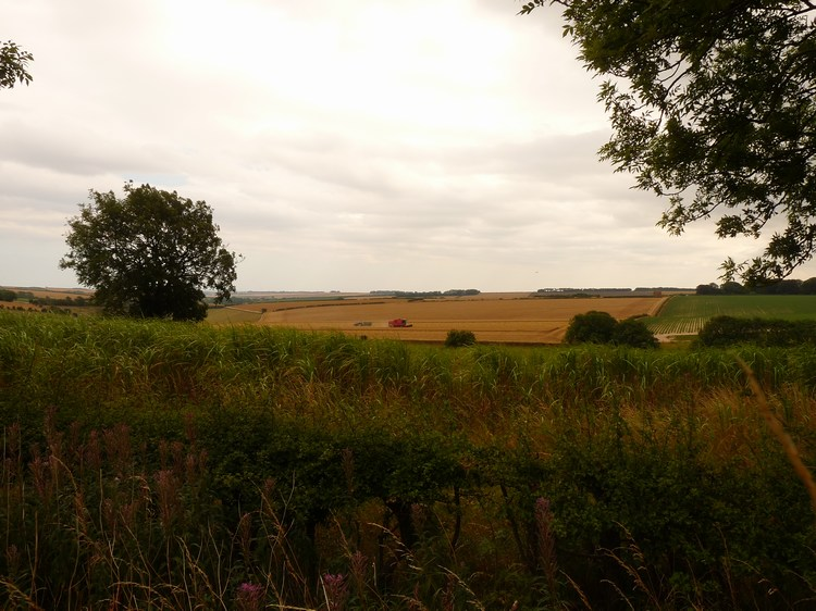 yorkshire-wolds-27